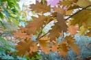 Kościól jesienią